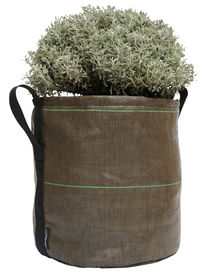BACSAC - Vase