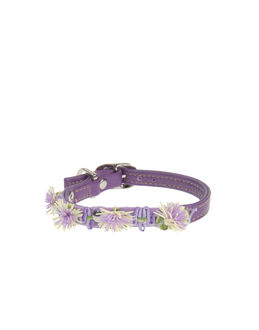 DVS DOG VIP STAR Collars - Item 58009141