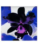 Yoox.fr - Marc quinn small square orchid limited edition print ii ?uvre graphique mixte