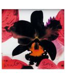 Yoox.fr - Marc quinn small square limited edition print v ?uvre graphique mixte