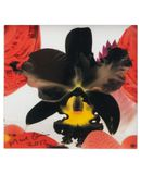 Yoox.fr - Marc quinn small square limited edition print vi ?uvre graphique mixte