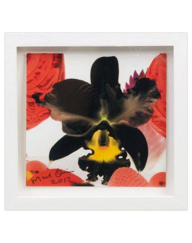 MARC QUINN - Print