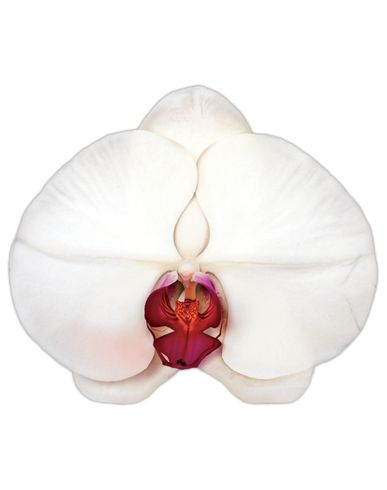 MARC QUINN - Gift idea