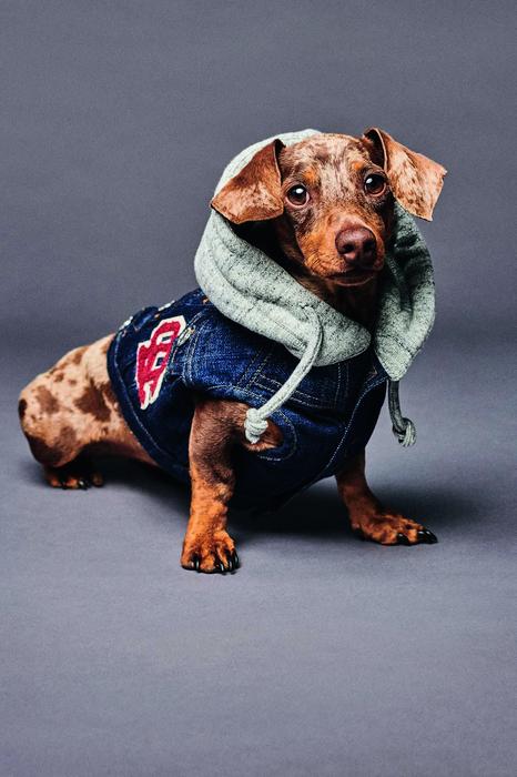 Unisex Habillement pour chien Taille Chihuahua-Yorkshire[Cou 22 cm] 98% Coton 2% Élasthanne - Dsquared2 - Modalova
