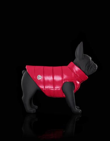 MONDOG Fuchsia Catégorie Vêtements pour chien