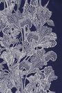 ROBERTO CAVALLI Fringed floral-print silk scarf
