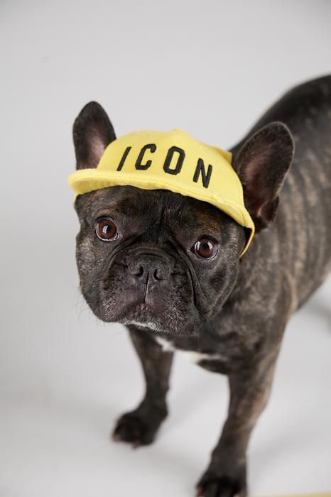 Unisex Habillement pour chien Taille OneSize 100% Coton - Dsquared2 - Modalova