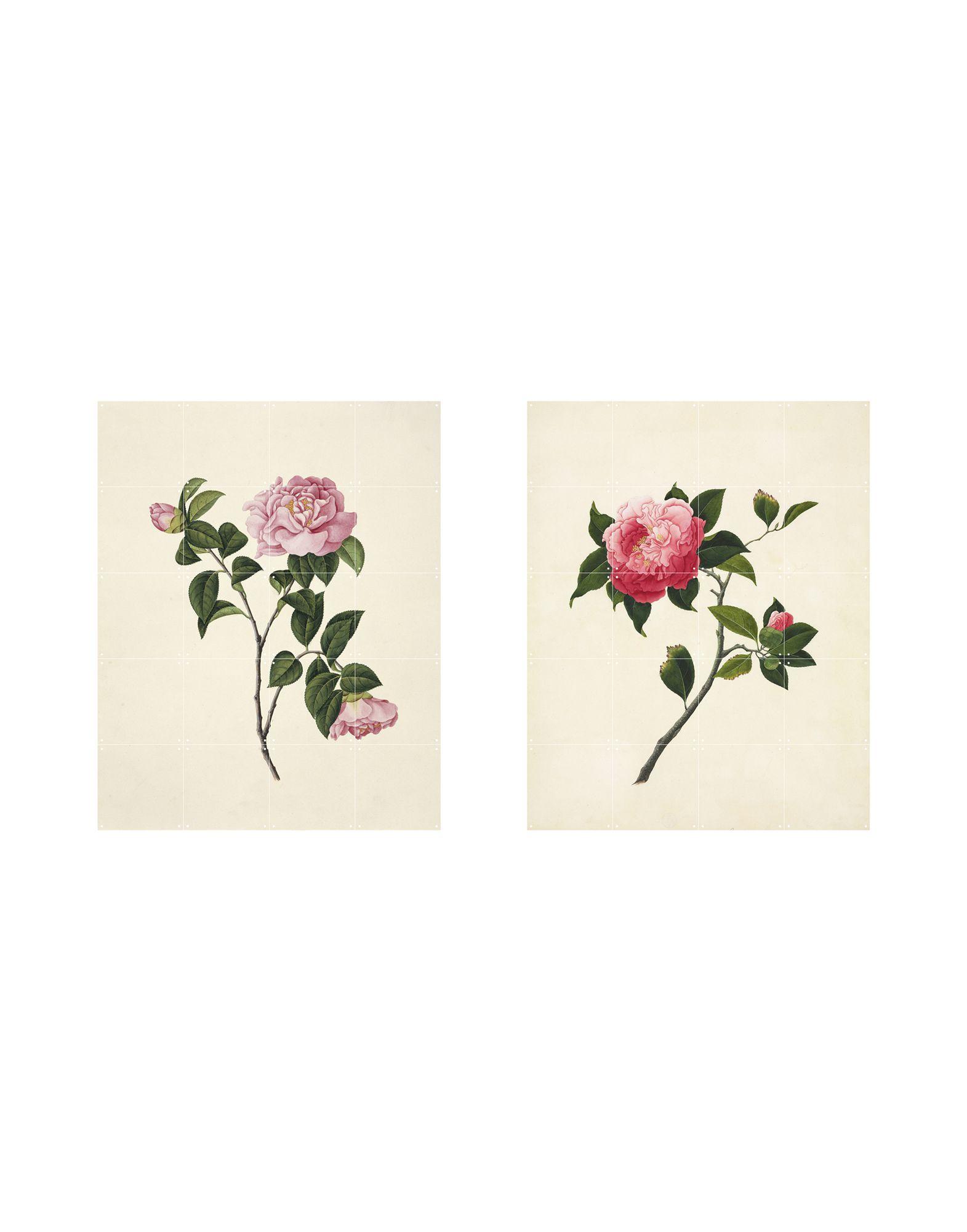 《送料無料》IXXI Unisex デコレーション ホワイト 指定外繊維(紙) Two Flowers
