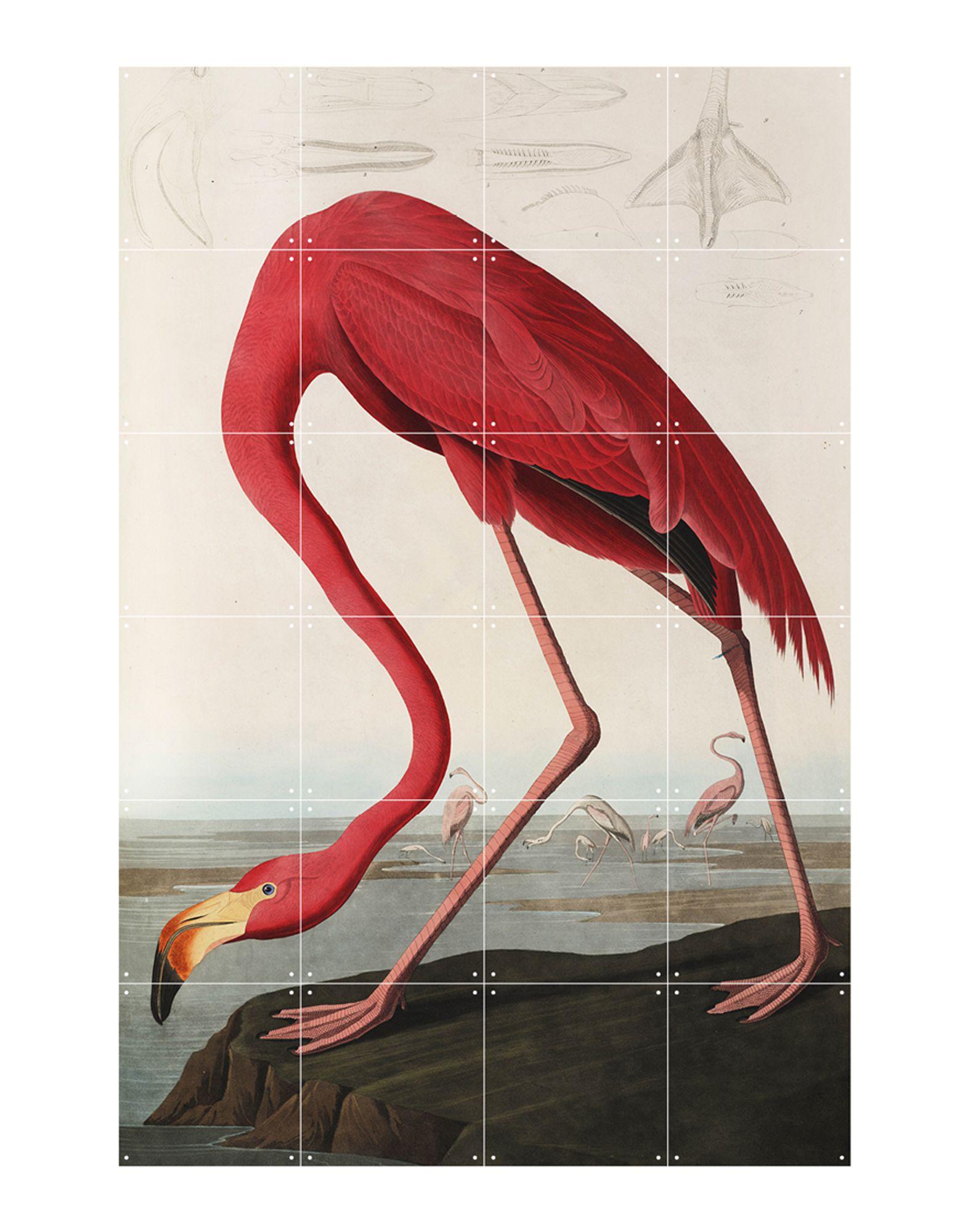 《送料無料》IXXI Unisex デコレーション ホワイト 指定外繊維(紙) Flamingo: Audubon