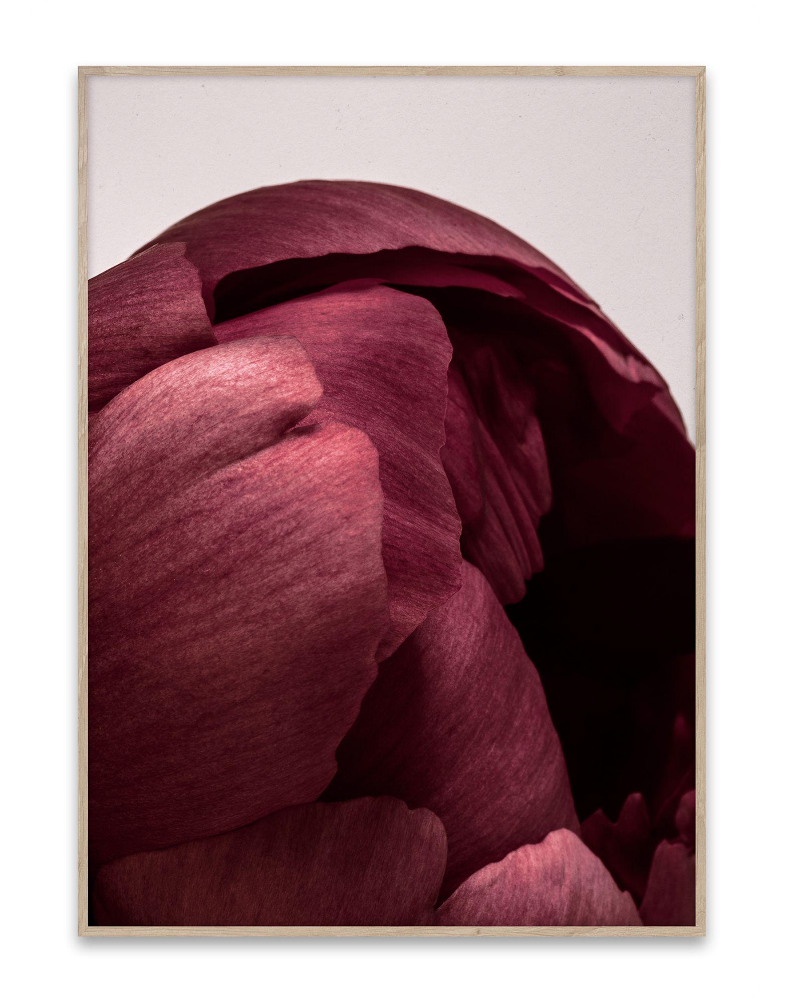 《セール開催中》PAPER COLLECTIVE Unisex デコレーション (-) 指定外繊維(紙) Peonia 01