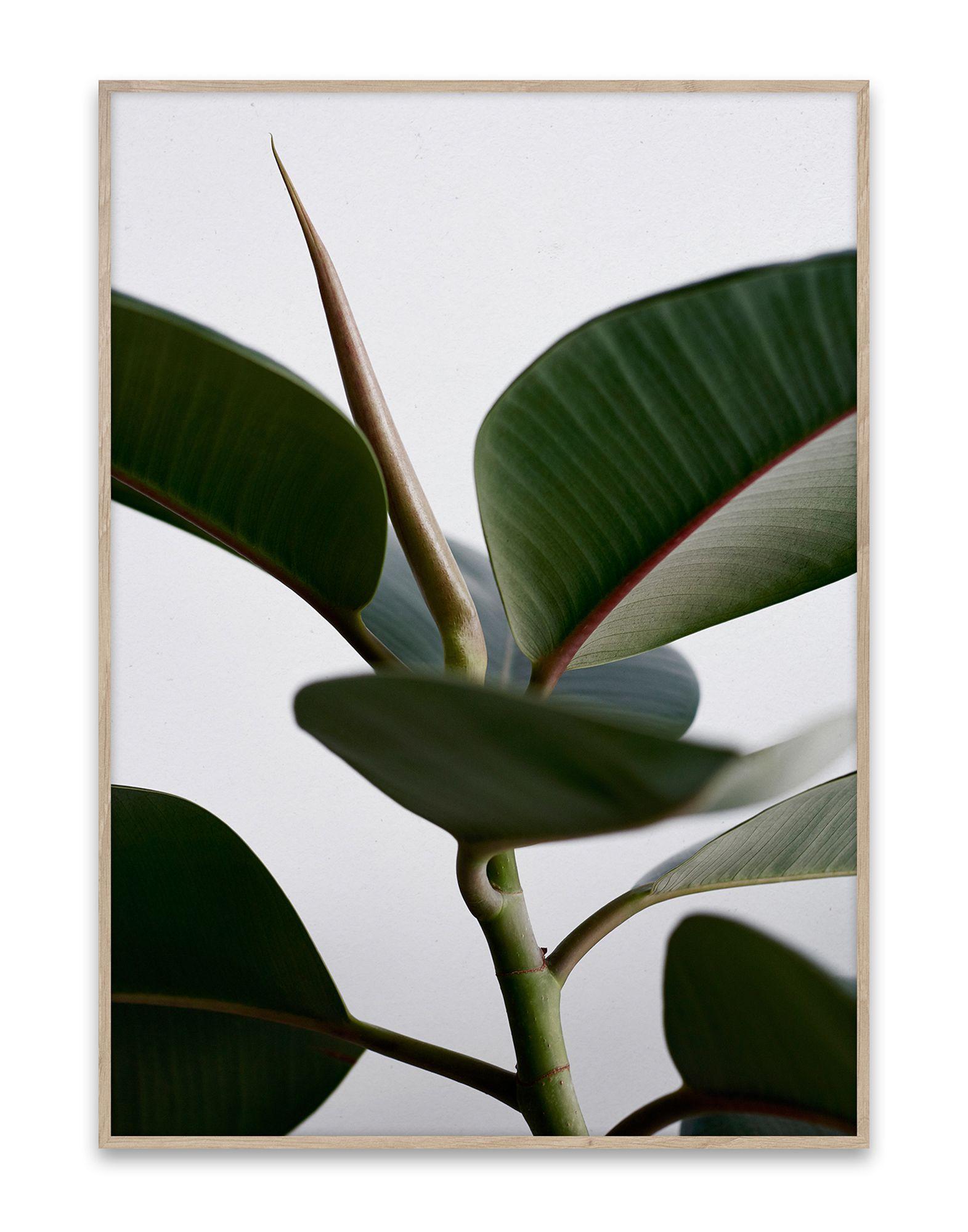 《セール開催中》PAPER COLLECTIVE Unisex デコレーション (-) 指定外繊維(紙) Green Home 02