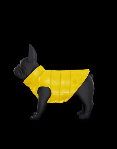 MONDOG Yellow Dogwear Woman