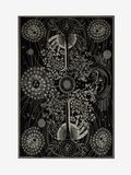 ALEXANDER MCQUEEN Men's Scarf U Tree of Life Blanket f